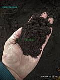 Чернозем в мешках  Киев Святошино Борщаговка Почва Грунт в мешках, фото 5