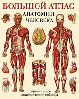 "Книга ""Большой атлас анатомии человека"", Махиянова Евгения Борисовна | Эксмо, АСТ"