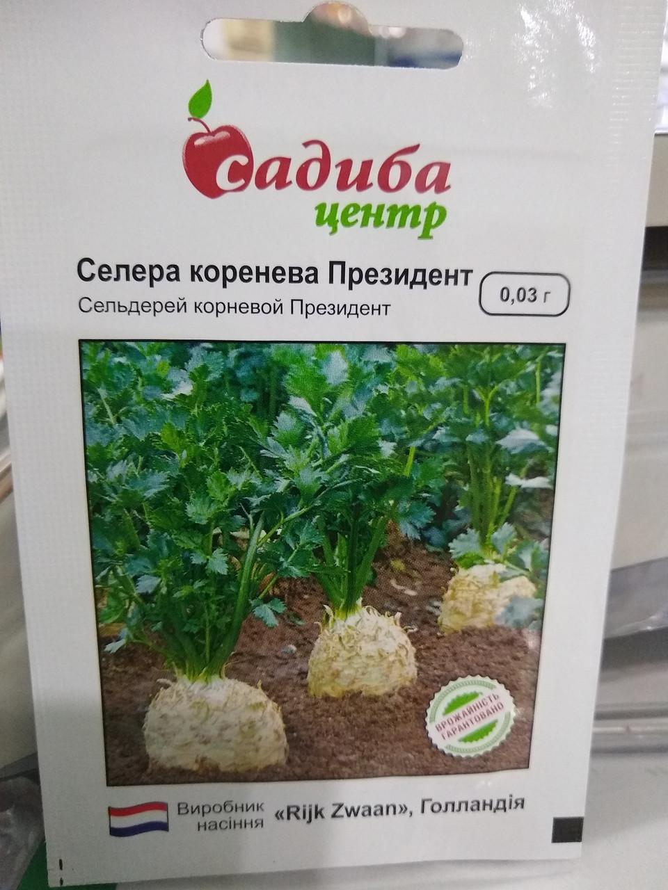 Насіння селери кореневої Президент для свіжого ринку і для зберігання 0,03 грам насіння Rijk Zwaan Голландія