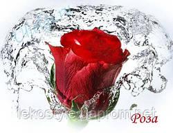 Розы отдушка