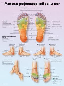 Анатомический плакат 67х50см. (массаж рефлекторной зоны ног)