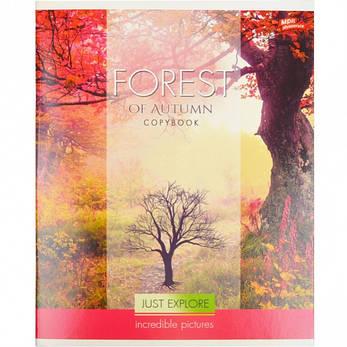 Тетрадь цветная 60 листов, линия «Осень»            12 штук              2209л, фото 2