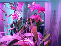 Фитолампы для орхидей