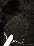 Чорнозем в мішках купити Київ, купити Чорнозем не дорого Грунт перегній київ, фото 3