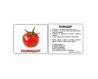 "Карточки мини русские с фактами ""Овощи"" 40 карт 095634"