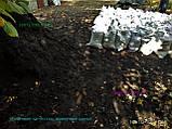 Чорнозем продажів Київ Чорнозем в мішках Київ Грунт рослинний купити Київ, фото 9