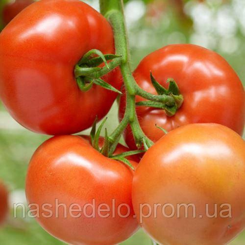 Бехрам Ф1 500 сем. томат Энза