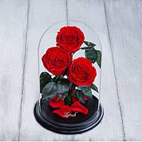 Стабилизированные три розы в колбе Lerosh - Premium 33 см, Красная - 138957