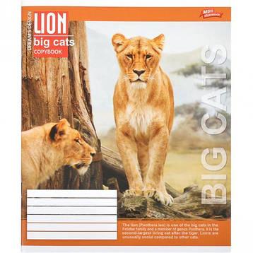 Тетрадь цветная 36 листов, клетка «Большие кошки»          16 штук               2667к, фото 2
