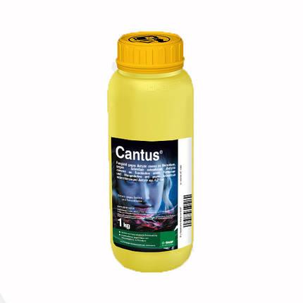 Фунгицид Кантус 50 % в.г. BASF - 1 кг, фото 2