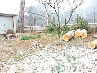 Вырубка деревьев и расчистка территории