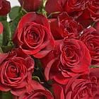 Саженцы розы чайно-гибридная Престиж (Rose Prestige), фото 2