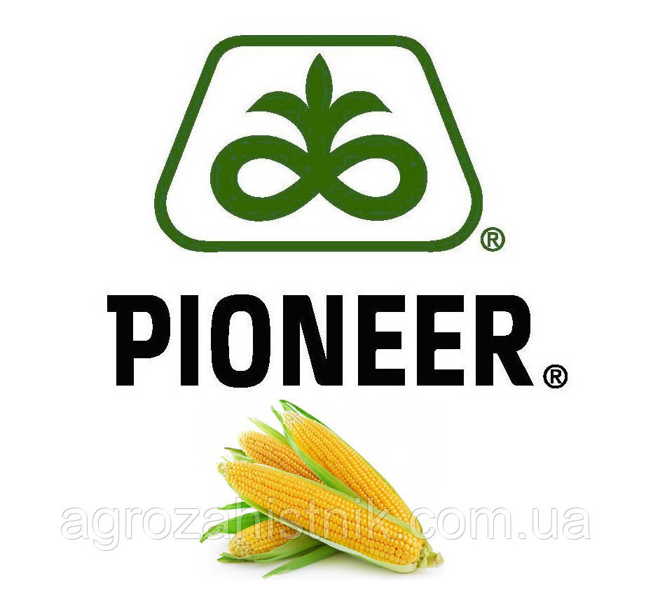 Семена кукурузы | ПР39Р20