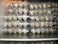 Яйцо перепелиное столовое (домашнее)