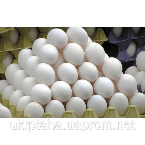 Легорн, куриное инкубационное яйцо