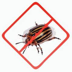 Средства для борьбы с жуками