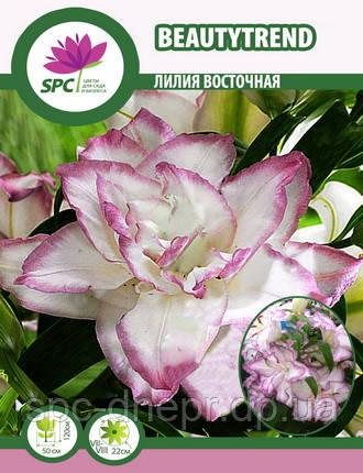 Лилия восточная махровая Beautytrend, фото 2
