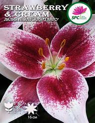 Лилия азиатская Strawberry & Cream