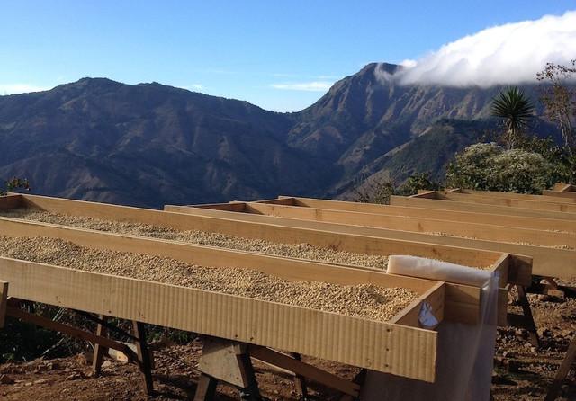 как появился кофе арабика в Коста-Рике, качественная арабика в зернах