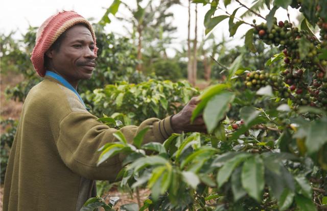 купить кофе робуста Уганда в Украине свежая обжарка