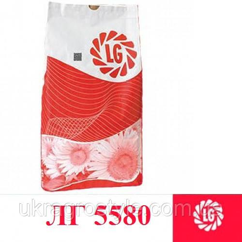 Семена подсолнуха Лимагрейн LG 5580 (Новая Тунка)