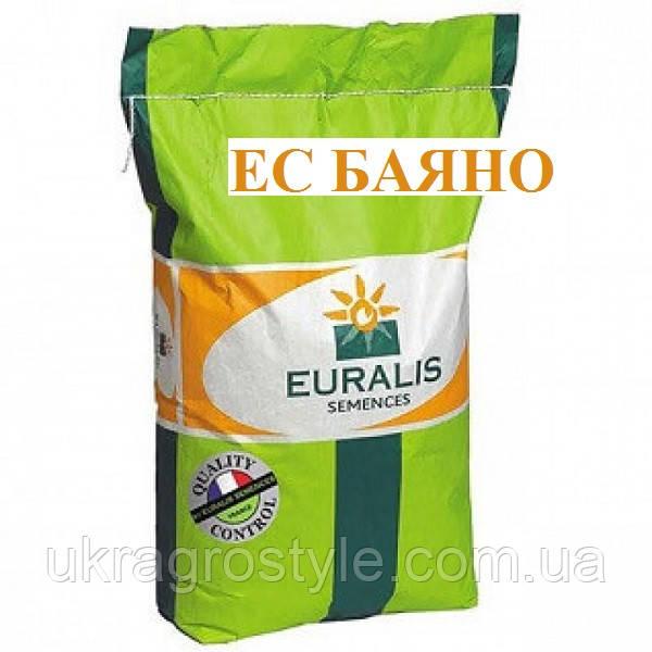 Баяно (Евралис) Семена Подсолнечника