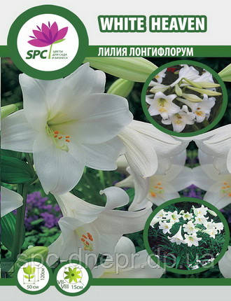Лилия лонгифлорум трубчатая White Heaven