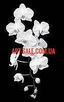 Картина Черно-белая Орхидея