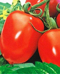 Семена томатов Рио Фуего