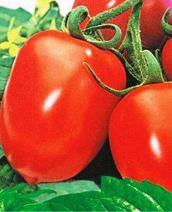 Семена томатов Рио Фуего, фото 2