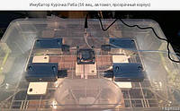 Инкубатор Курочка Ряба ИБ-56 автомат на 56 яиц, вентилятор,без регулятора влажности,пластиковый бокс