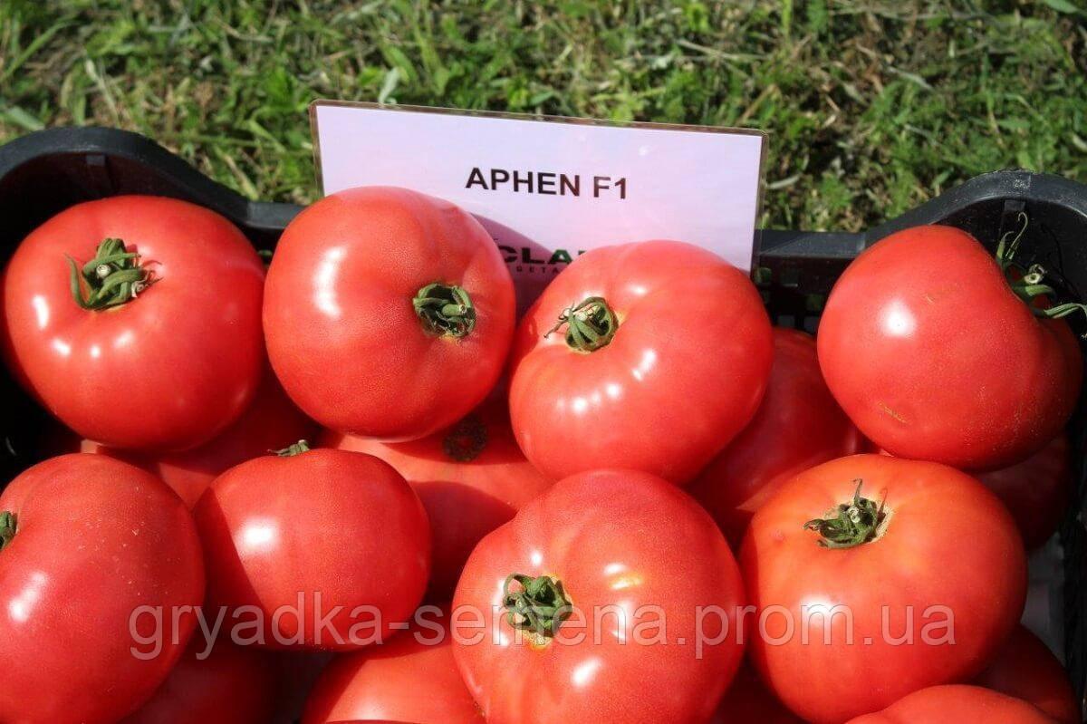 Томат Афен  F1 Clause 1000 семян
