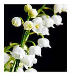 SEDUCCION жіночі парфуми Yodeyma 15 мл, фото 3