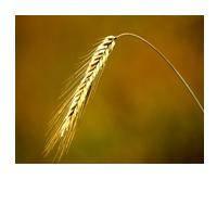 Регулятор росту Хломеквид (20 л)