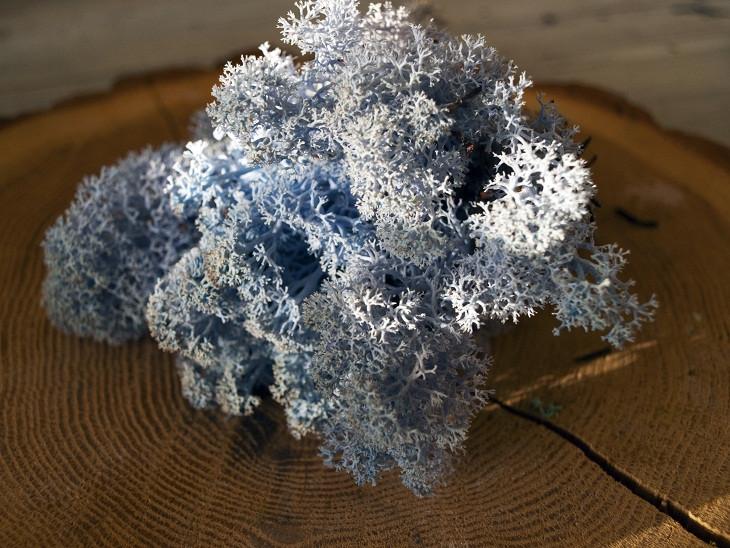 Мох стабилизированный ягель для фитостен Lavanda blue
