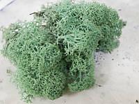 Мох стабилизированный ягель для фитостен pacific green, фото 2