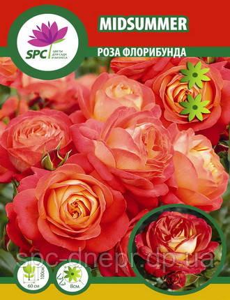 Роза флорибунда Midsummer, фото 2