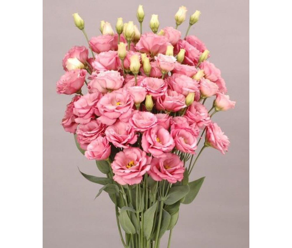 Эустома АВС F1, розовая 100 семян