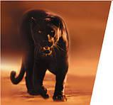 Газовий котел Protherm пантера 25 KOV димар, фото 3