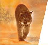 Газовый котел Protherm Рысь LYNX 28 турбо, фото 5