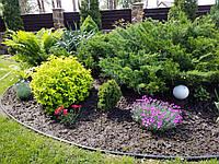 Озеленение участка, фото 1