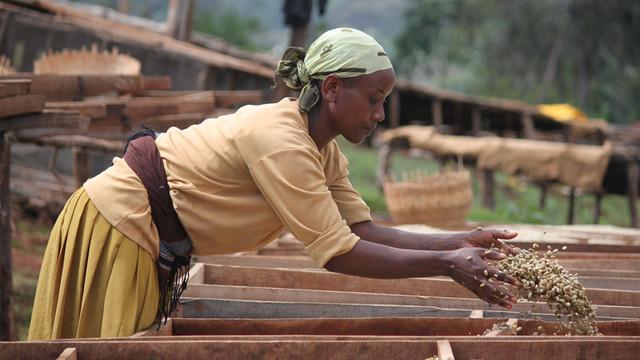 кофе в зернах эфиопия иргачиффе или йоргачиф? мытая обработка арабики в Эфиопии