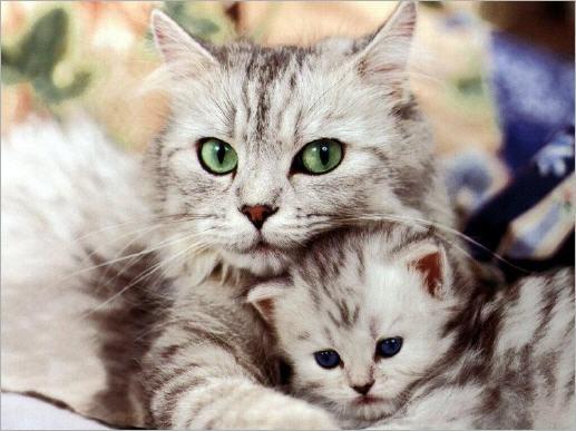 """Алмазная вышивка 40х30 - набор """"Кошка с котенком"""""""