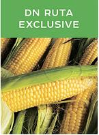 Насіння кукурудзи ДН Рута ( DN RUTA exclusive)
