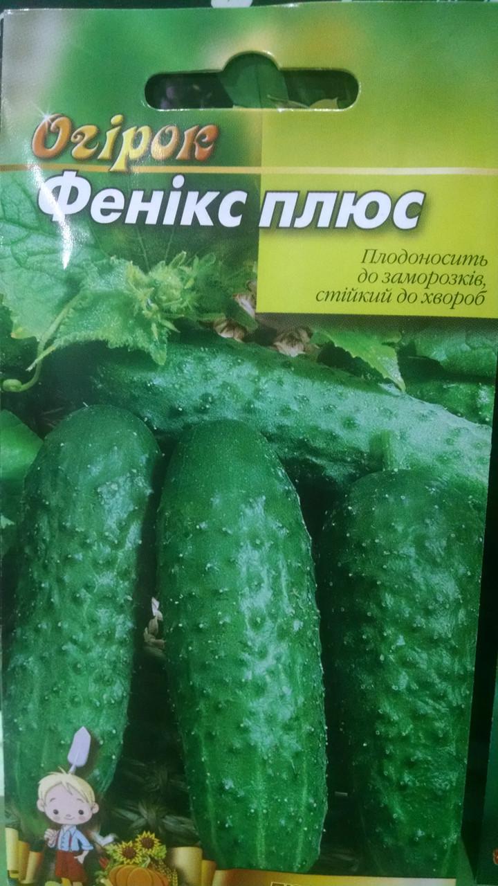 Семена позднеспелые Огурцы Феникс плюс сорт 100 грамм семян Украина