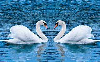 Наборы алмазной вышивки - лебеди, голуби, птички