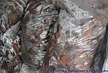 Кора сосновая для мульчирования Мульча Киев Киевская область купить кора крупная, фото 3