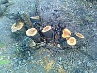 Работы по вырубке деревьев и расчистке территории