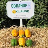 Перец Соланор F1 Clause 1000 семян