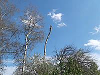 Удаление деревьев на кладбищах
